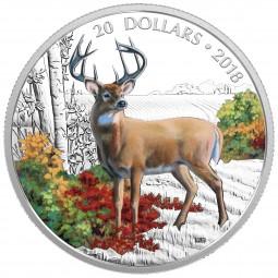 1 Oz Silber Proof Majestic Wildlife: Wandering White-tailed Deer 20 CAD Kanada 2018