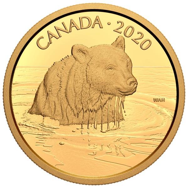 1 Unze Gold Proof Canadian Wildlife Portraits: Der Grizzlybär 350 Dollar Kanada 2020