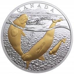 1 Oz Silber Proof gilded FROM SEA TO SEA: artic beluga whale Kanada 20 CAD 2017
